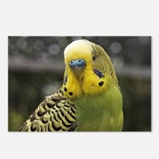 Funny Parakeets Postcards (Package of 8)