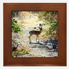 Damara Dik-Dik Africa Framed Tile