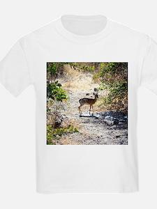 Damara Dik-Dik Africa T-Shirt
