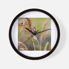Cute Sea sparrow Wall Clock