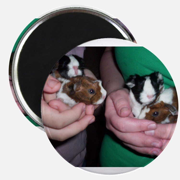 Baby guinea pigs Magnets