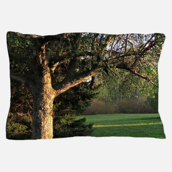 Evening trees Pillow Case