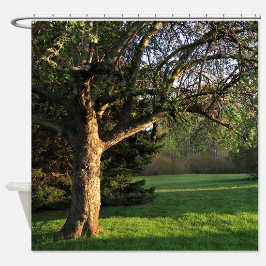 Evening trees Shower Curtain