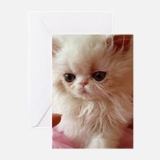 Baby Persian Kitten Greeting Cards