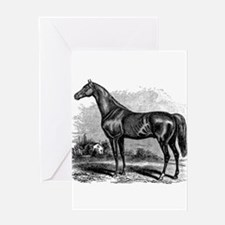 Vintage Race Horse American Black W Greeting Cards