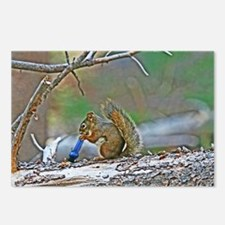 Chronic Squirrel Postcards (Package of 8)