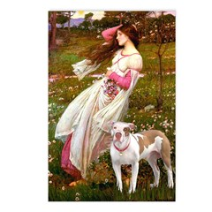 Windflowers / Pitbull Postcards (Package of 8)