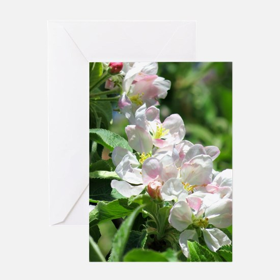 Apple blossoms Greeting Cards
