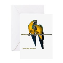 Blue N Yellow Macaw (pair) Greeting Card