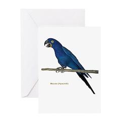 Hyacinth Macaw Greeting Card