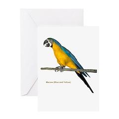 Blue N Yellow Macaw Greeting Card