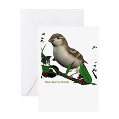 House Sparrow (female) Greeting Card