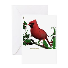 Cardinal (male) Greeting Card