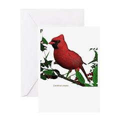 Cardinal (male) Greeting Card