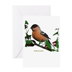 Bullfinch (male) Greeting Card