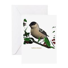 Bullfinch (female) Greeting Card