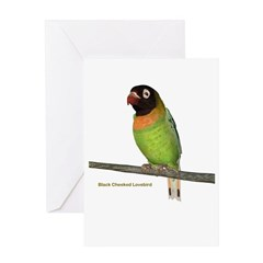 Black Cheeked Lovebird Greeting Card