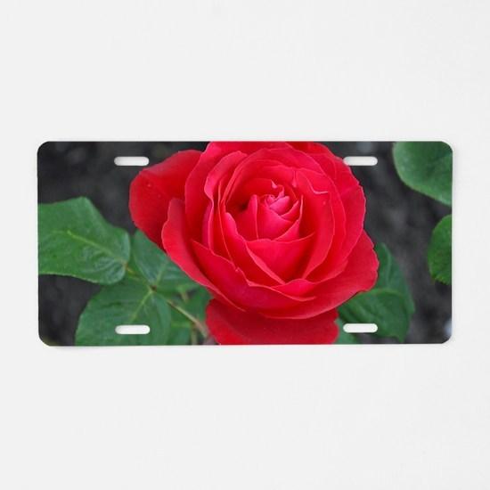 Cool Roses Aluminum License Plate