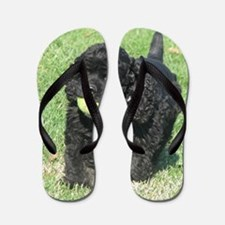 Cute Cocker spaniel Flip Flops