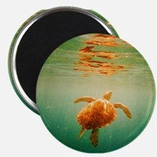 Sea Turtle s Magnets