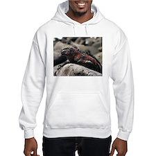 Galapagos Iguanas Hoodie - marine land