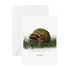 Box Turtle Greeting Card