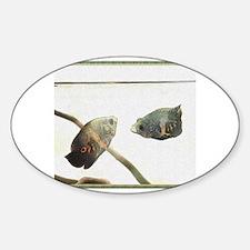 Cute Oscar cichlid Sticker (Oval)
