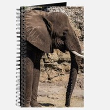 Cute Elephant photos Journal