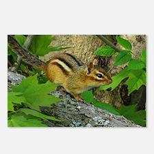 Roaming chipmunk Postcards (Package of 8)