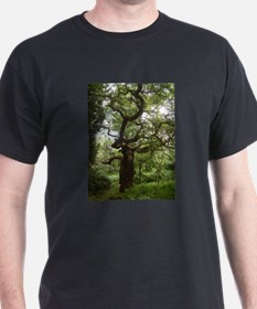 Real Fairy Tree In Sherwood Forest T-Shirt