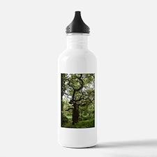 Real Fairy Tree In She Water Bottle