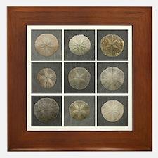 Gloucester Sand Dollar Framed Tile