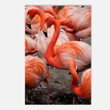 Unique Flamingo painting Postcards (Package of 8)