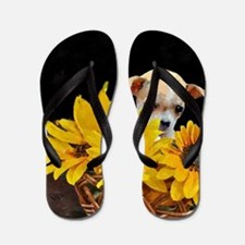 Cool Chihuahua Flip Flops