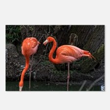 Funny Flamingo painting Postcards (Package of 8)