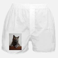 chartreux peeking Boxer Shorts