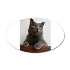 chartreux peeking Wall Decal