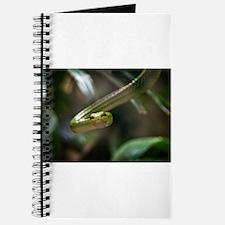 Green Tree Python Journal