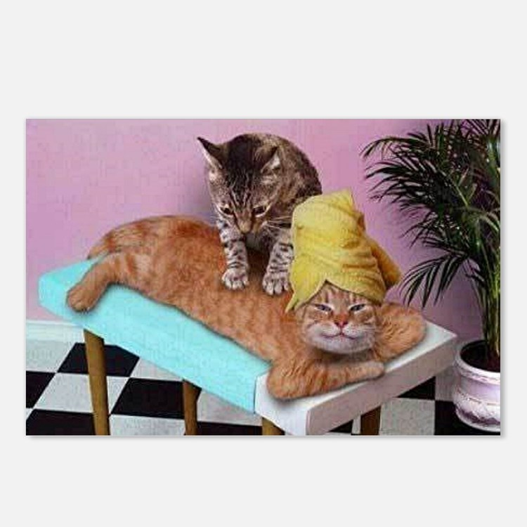 Funny Cat Massage Postcards (package Of 8)