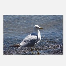 Unique Seagull Postcards (Package of 8)