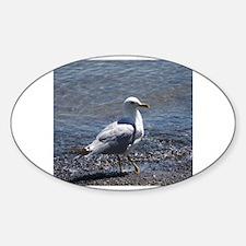 Cute Seagull Decal