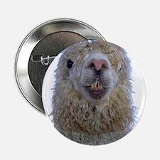 "Alpaca Closeup 2.25"" Button"