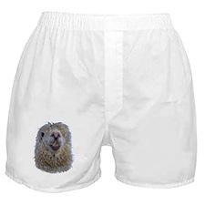 Alpaca Closeup Boxer Shorts