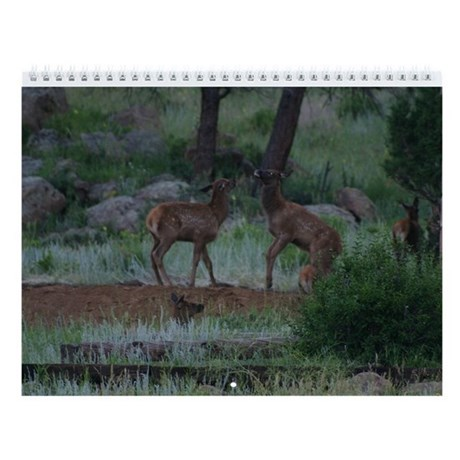 Animal Images Calendar Wall Calendar