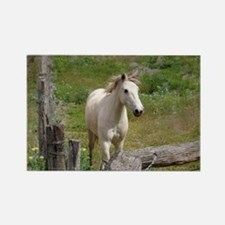 Cute Australian brumby%2c see brumby Rectangle Magnet