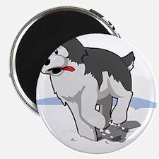 Husky running in snow Magnets