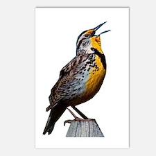 Western Meadowlark Postcards (Package of 8)