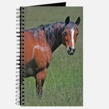 Horse early summer Journal
