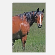 Horse early summer Postcards (Package of 8)