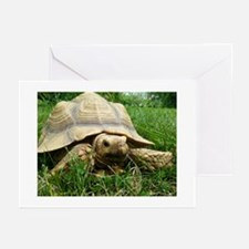 Sulcata Tortoise Greeting Cards